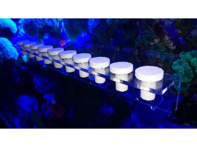 Fish & Aquariums 40 Reef Plugs For Live Coral Frag Propagation Coral & Live Rock